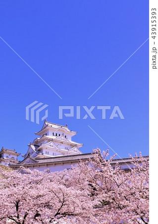 姫路城と桜 43915393