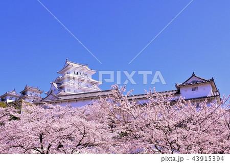 姫路城と桜 43915394