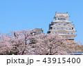春 桜 城の写真 43915400