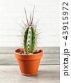 植物 サボテン 鉢の写真 43915972