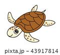 ウミガメ 43917814