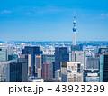 東京 東京スカイツリー スカイツリーの写真 43923299