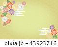 菊 和柄 背景のイラスト 43923716