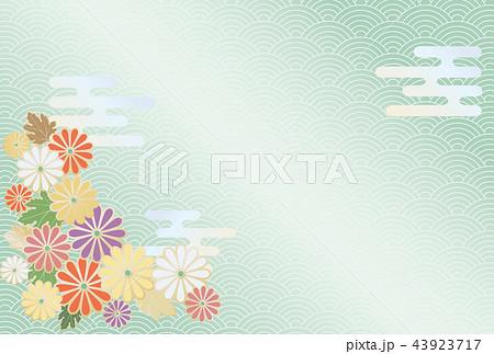 菊の花と日本の伝統模様の背景 43923717