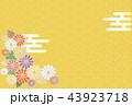 菊 和柄 背景のイラスト 43923718