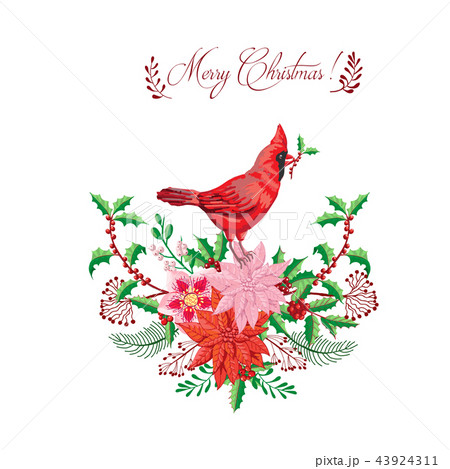 Christmas decoration with Bird and Poinsettia. Vector Illustration 43924311