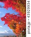 富士山 山 世界文化遺産の写真 43929934