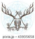しか シカ 鹿のイラスト 43935658