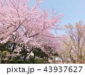花 植物 桃色の写真 43937627