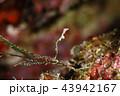 水中 海中 水中写真の写真 43942167