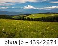 ニッコウキスゲ咲く霧ヶ峰 43942674