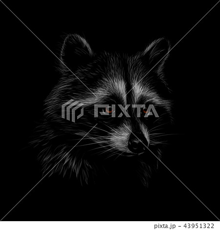 Portrait of a cute raccoon on a black background 43951322
