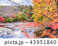 京都 紅葉 秋の写真 43951840