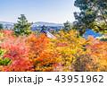 京都 天龍寺 紅葉の写真 43951962