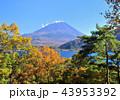 風景 富士山 世界遺産の写真 43953392