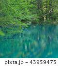 青沼 沼 五色沼の写真 43959475
