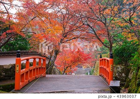 京都大原 三千院の紅葉と未明橋(茅穂橋) 43963037