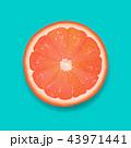 フルーツ 果実 果物のイラスト 43971441