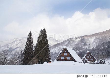 雪の白川郷合掌造り集落 三つ子の合掌造り 43983416