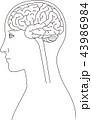 脳 横向き 脳みそのイラスト 43986984