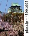 大阪城と梅の花 43991995