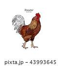 おんどり 酉 雄鶏のイラスト 43993645