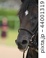 競馬 馬 競走馬の写真 44001319