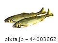 鮎 香魚 年魚のイラスト 44003662