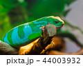 動物 イグアナ 爬虫綱の写真 44003932