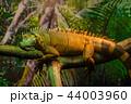 動物 イグアナ 爬虫綱の写真 44003960
