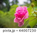 花 植物 クローズアップの写真 44007230