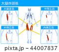 大腿 四頭筋 筋肉のイラスト 44007837