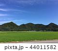 緑 稲 水田の写真 44011582