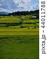 農村 実り 田んぼの写真 44011788