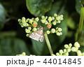 昆虫 虫 ガの写真 44014845