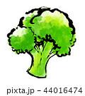 筆描き 野菜 食物 ブロッコリー 44016474