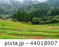 【千葉県】ヒガンバナ咲く大山千枚田 44018007