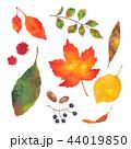 秋の葉っぱと木の実 44019850
