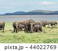 象の群れ@スリランカサファリ 44022769