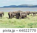 象の群れ@スリランカサファリ 44022770