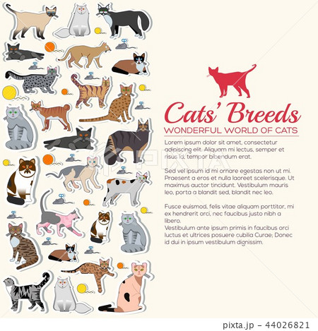 Vector breed cats icons sticker set. Cute animal illustrations pet design. Collection different 44026821