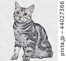 猫 アメリカンショートヘア 動物のイラスト 44027366