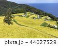 水田 日本 稲の写真 44027529