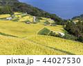田 棚田 風景の写真 44027530