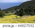 水田 日本 稲の写真 44027532