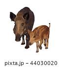 ヨーロッパイノシシ 44030020