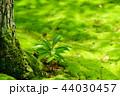 奈良・苔寺・秋篠寺の苔3 44030457