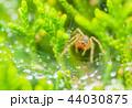 蜘蛛 昆虫 水滴の写真 44030875