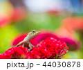 トカゲ 動物 爬虫類の写真 44030878