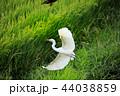 白鷺28 44038859